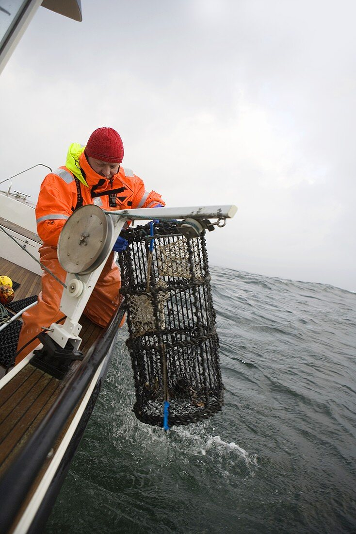 A fisherman with a lobster net at sea