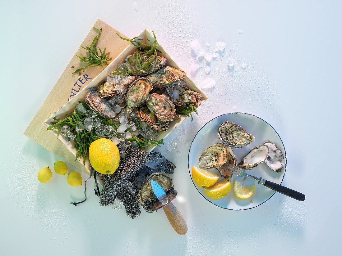 Sylt oysters with lemons, an oyster glove and an oyster knife