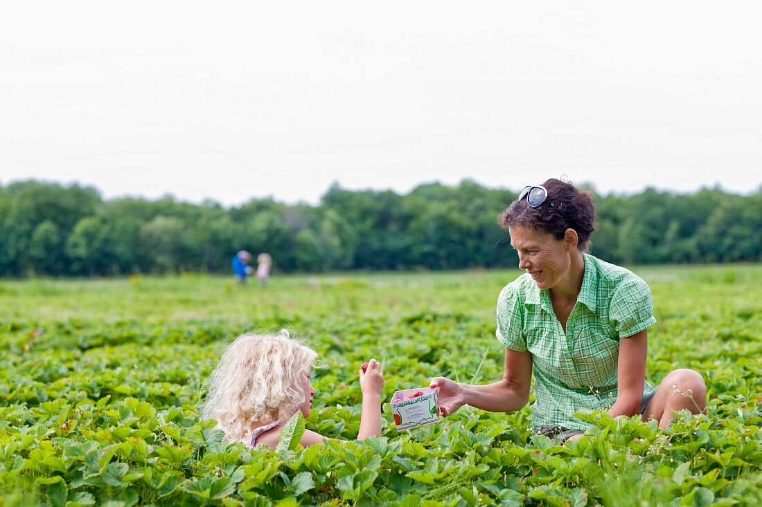 A mother and a daughter picking strawberries in a field