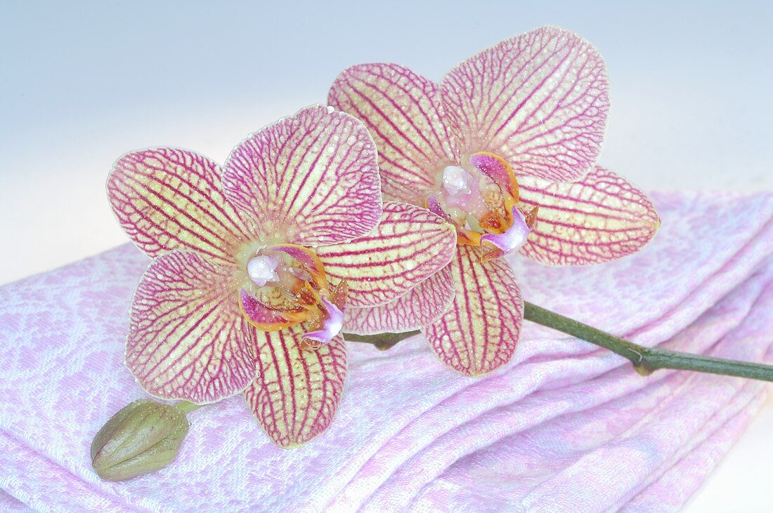 Pink orchids with towel