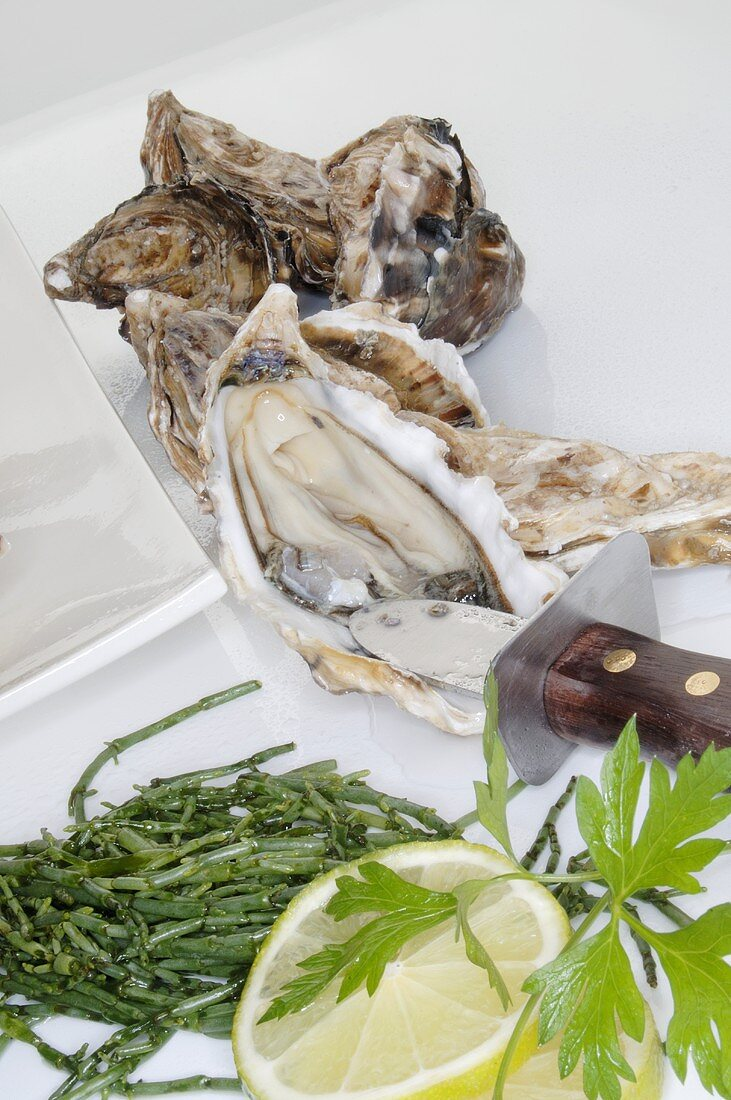 Fresh oysters with oyster knife, seaweed, lemon, parsley