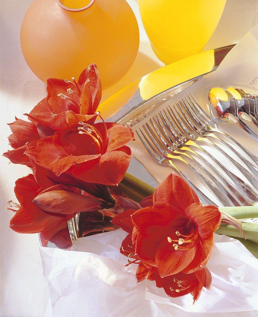 Amaryllis; Cutlery; Vase