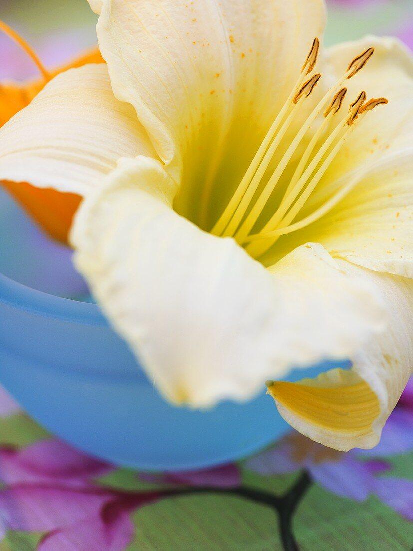 Taglilienblüte in blauer Schale