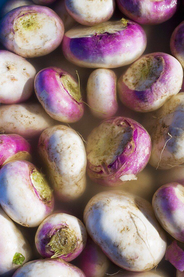 Turnips in water