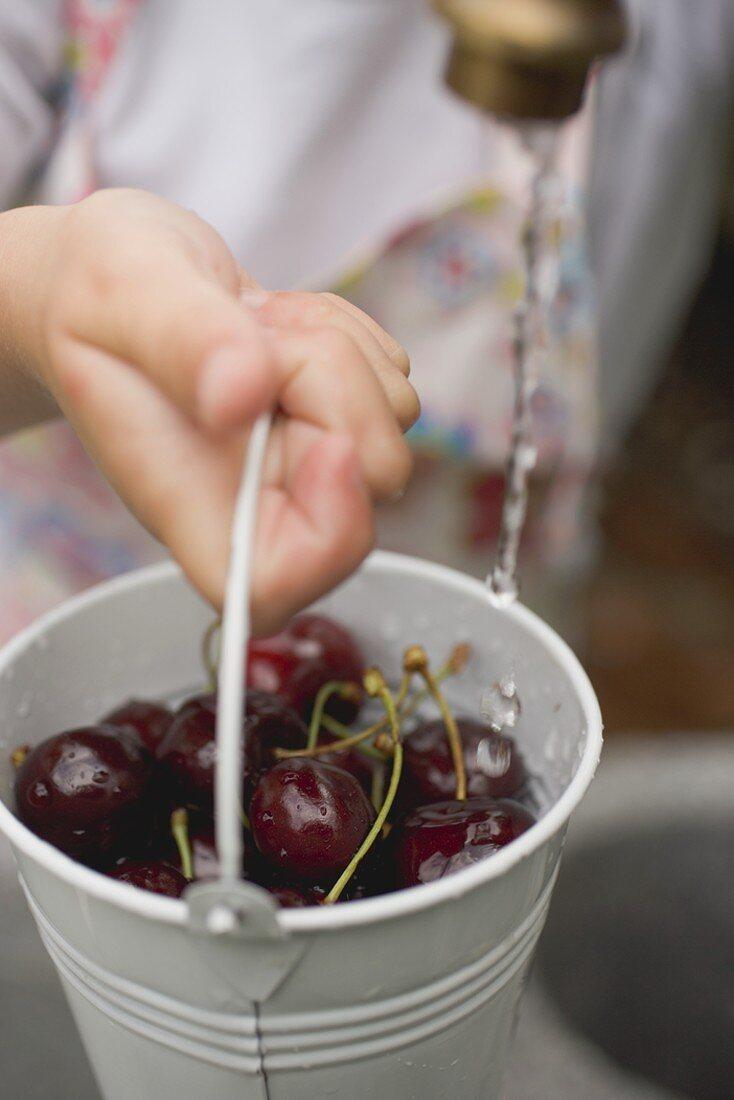 Washing cherries in a bucket under tap