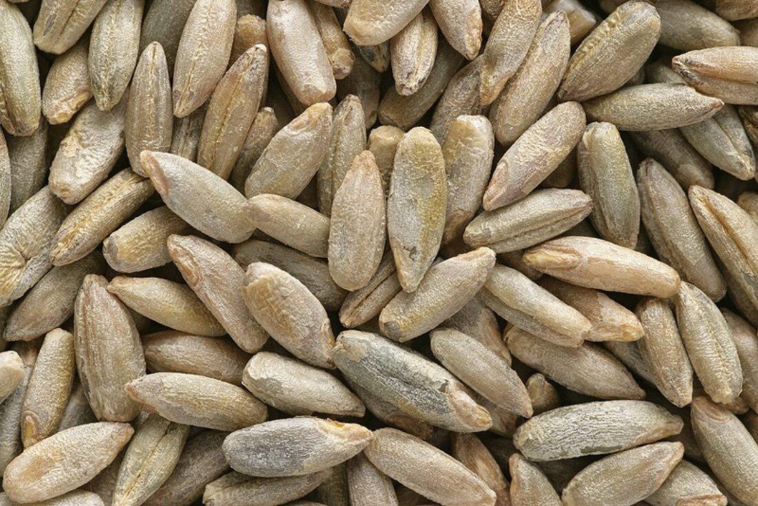 Grains of rye (full-frame)