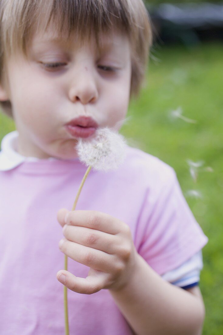 Child blowing a dandelion clock