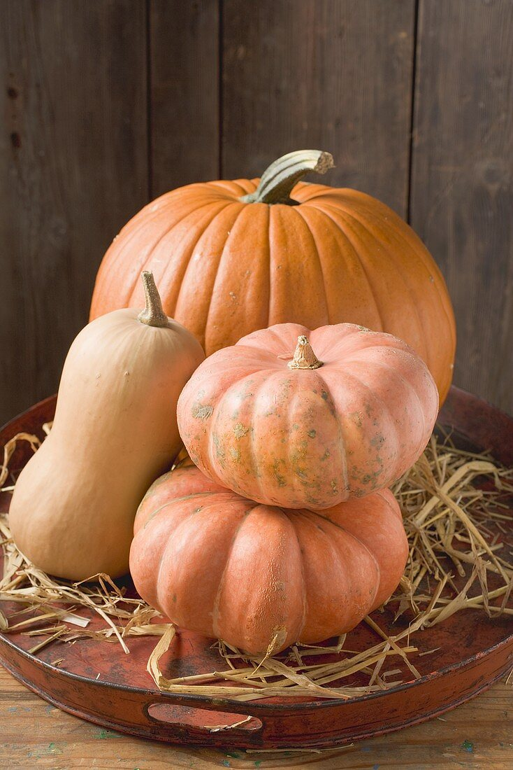 Pumpkins and squashes on old tray in front of wooden wall