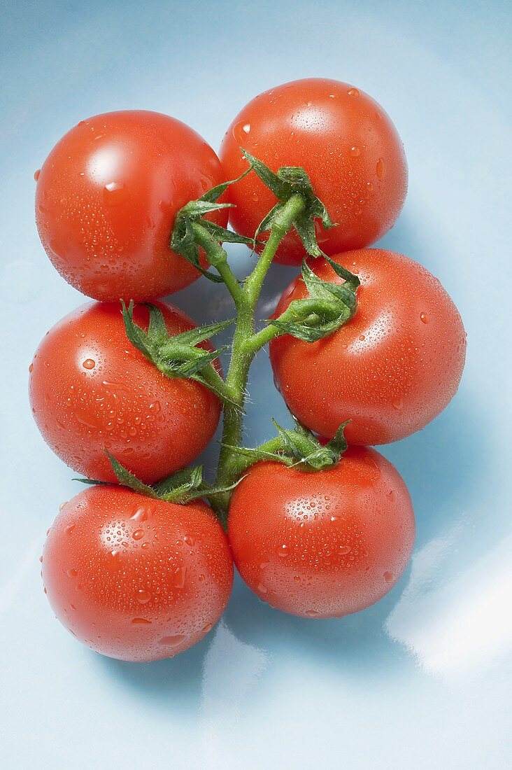 Vine tomatoes with drops of water