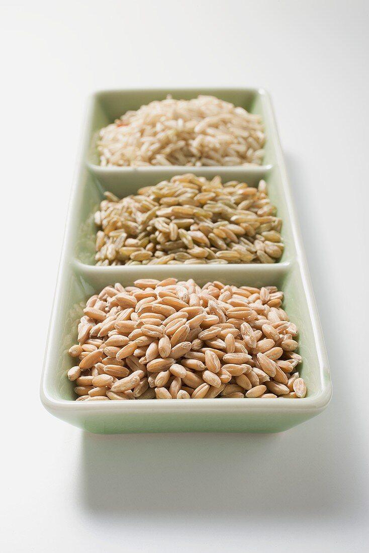 Spelt, unripe spelt and brown rice