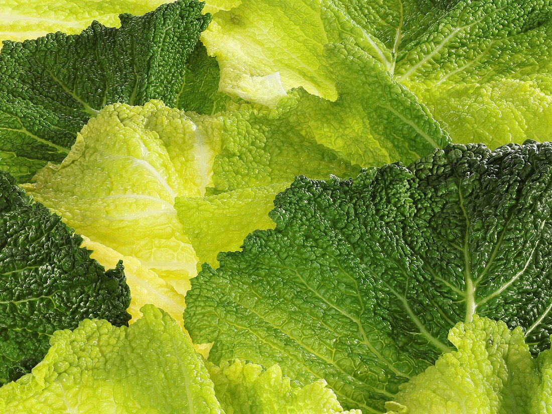 Blanched savoy cabbage leaves (full-frame)