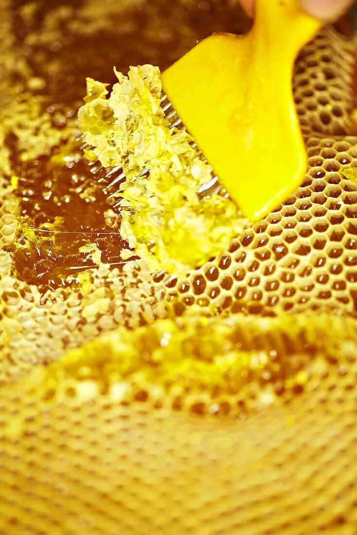 A honey comb being decapped with a fork