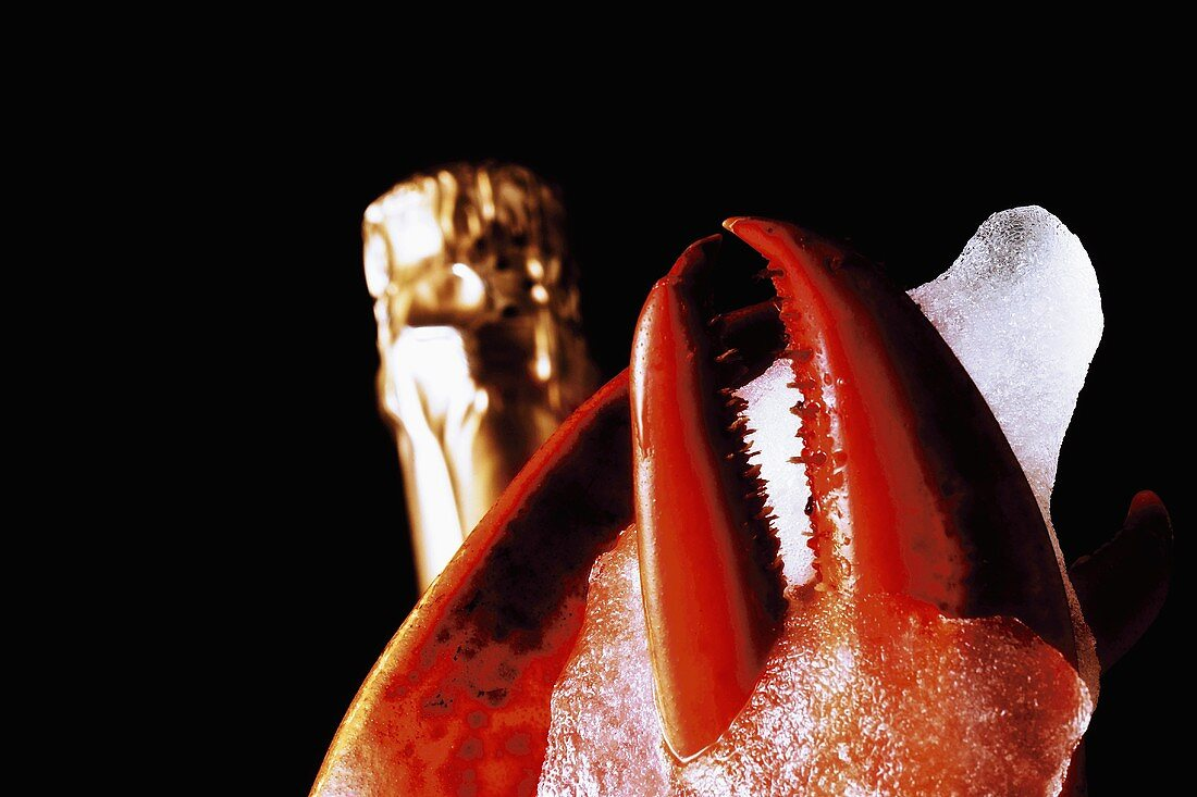 Lobster claw, champagne bottle behind, close-up