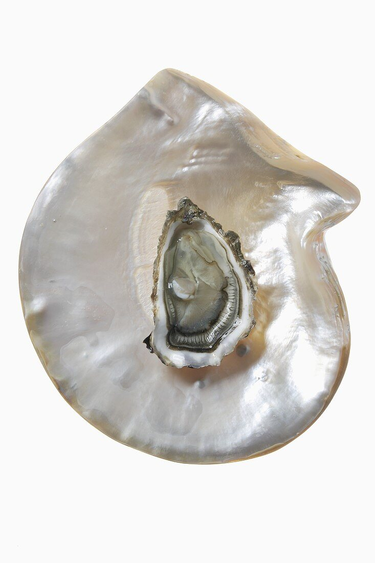 An oyster on mother-of-pearl background