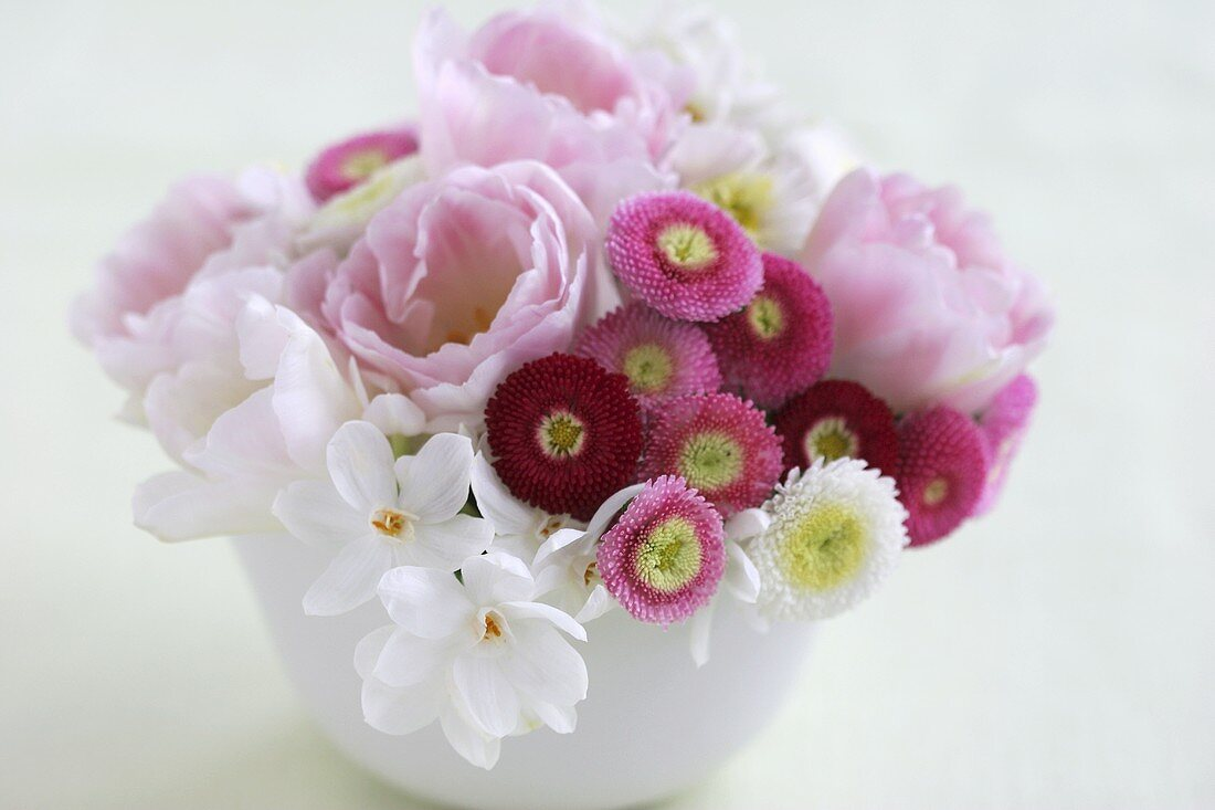 Bellis, tulips and narcissi in a bowl