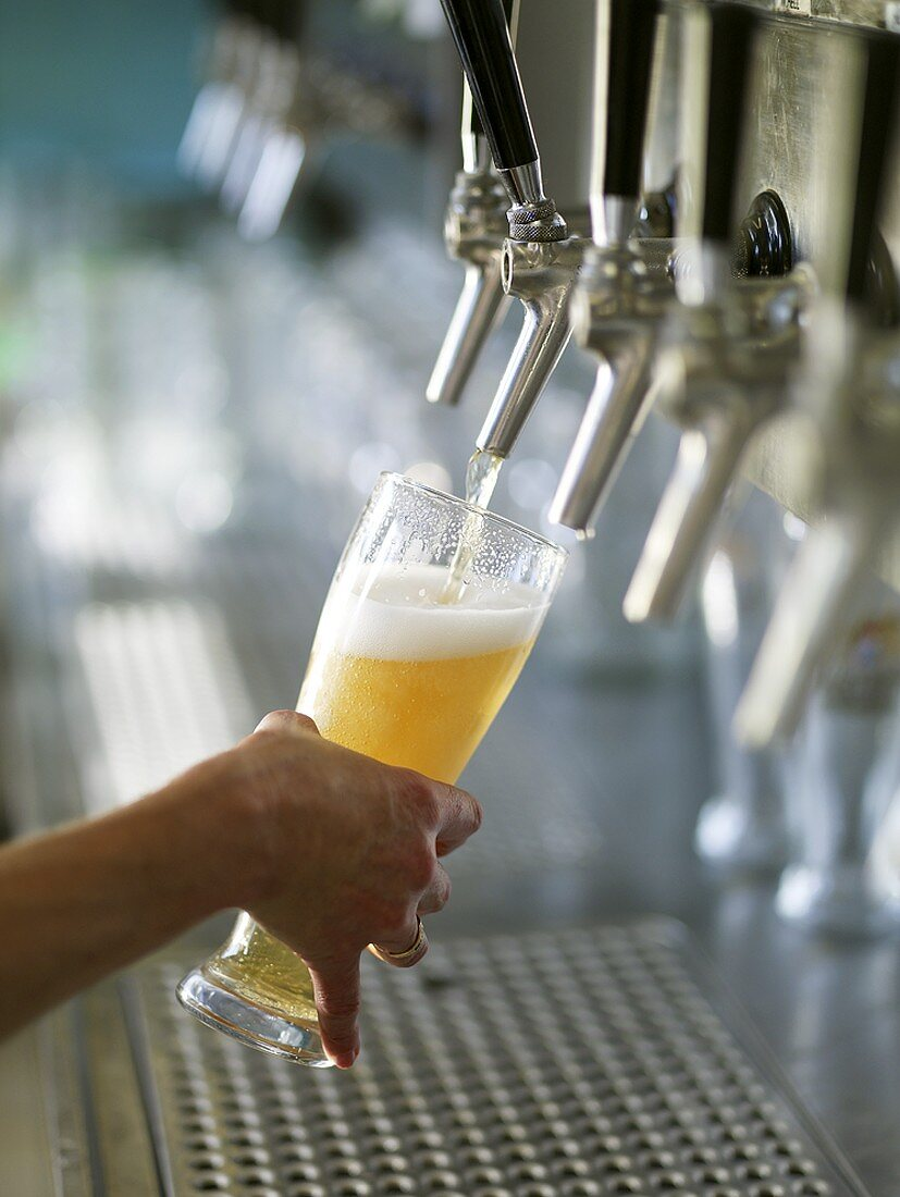 Pouring a glass of draught wheat beer