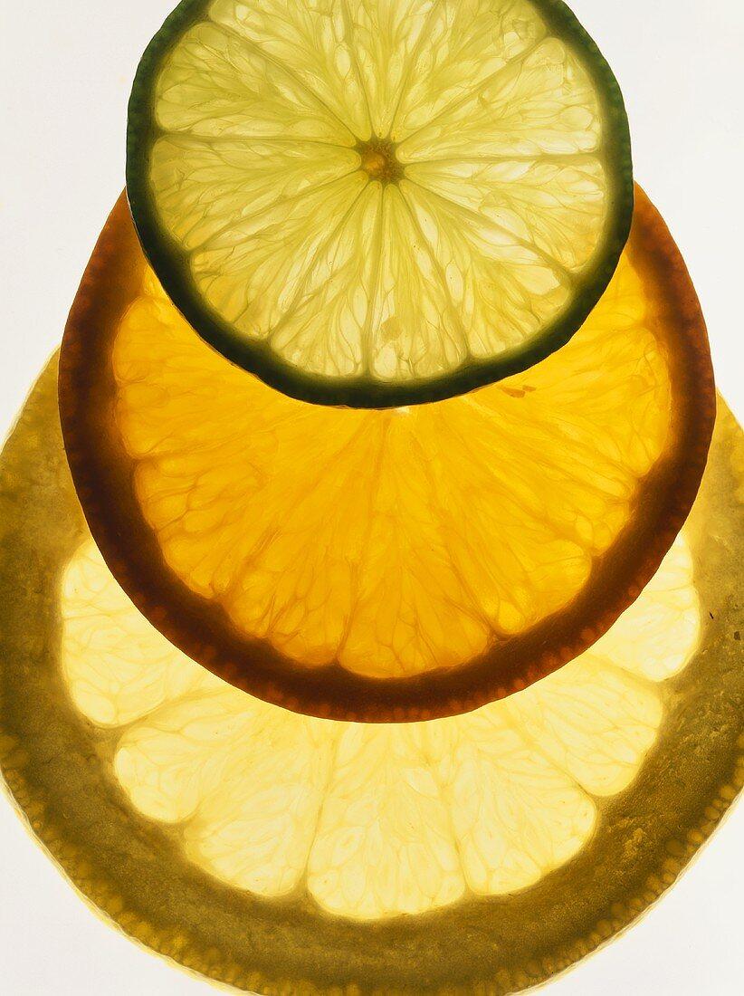 Lime, orange and grapefruit slices, backlit