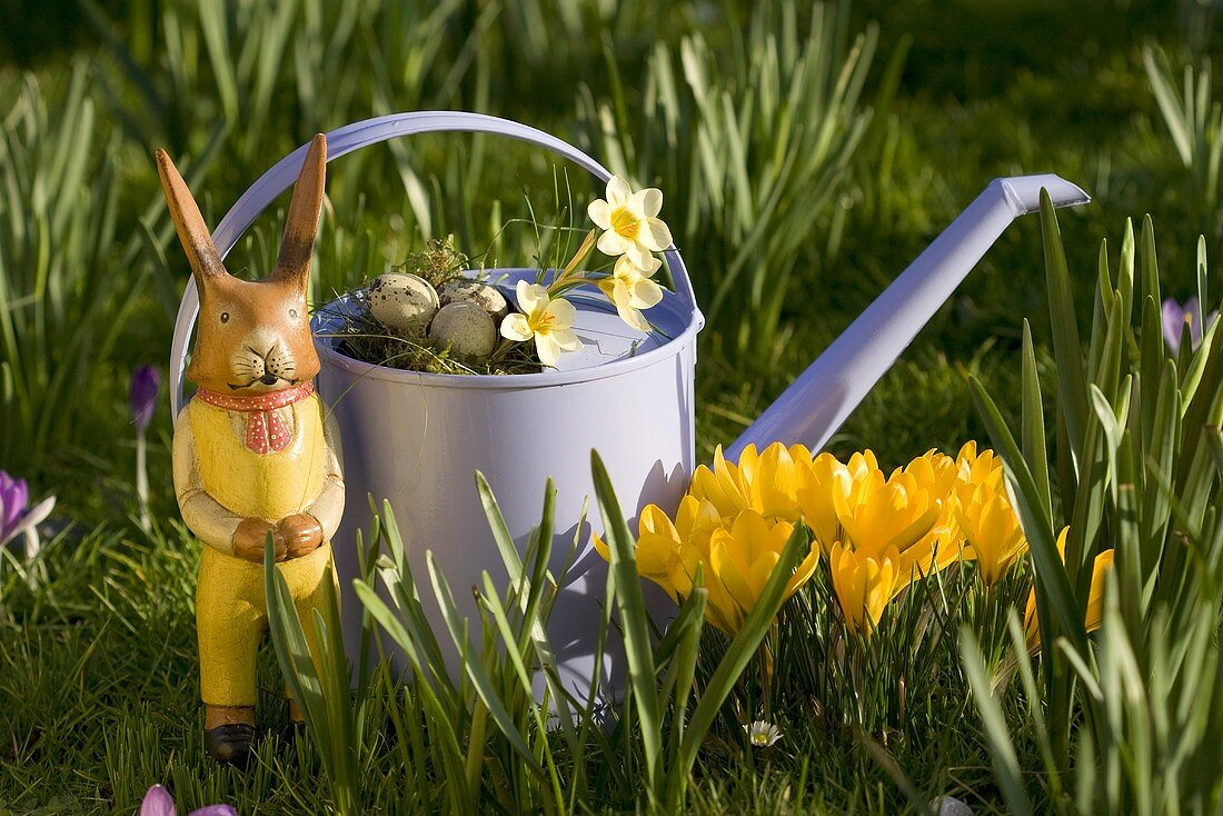 Watering can with crocuses and wooden rabbit