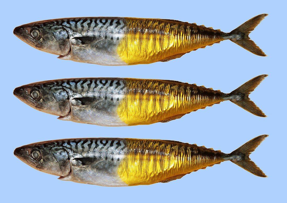Fresh smoked mackerels