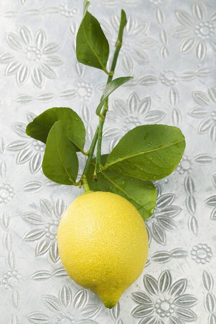 Fresh lemon with part of branch