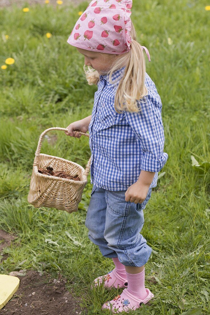 Little girl holding basket full of bark mulch in garden