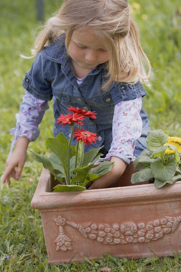 Little girl planting flowers in terracotta planter