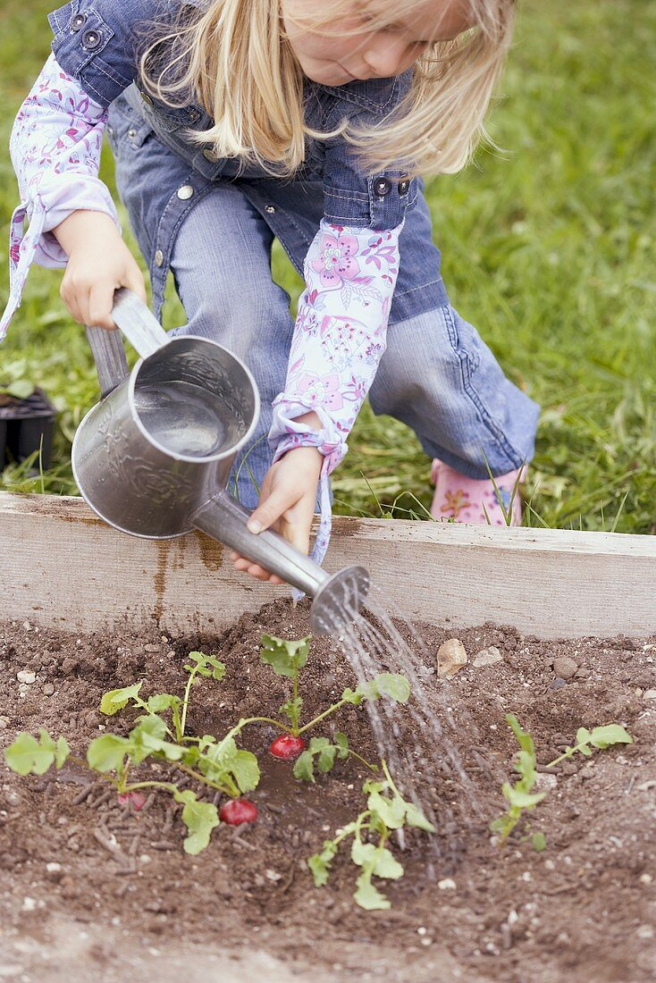 Little girl watering radishes
