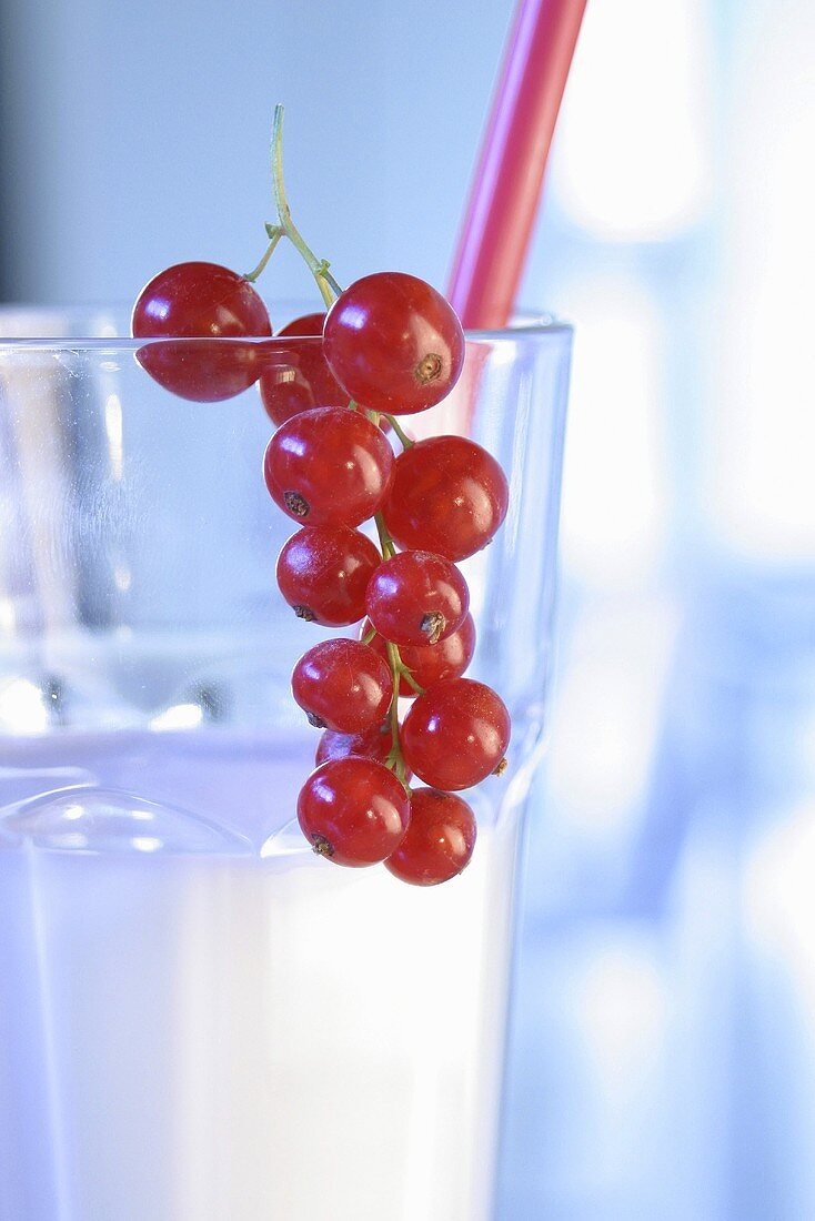 A glass of milk with redcurrants