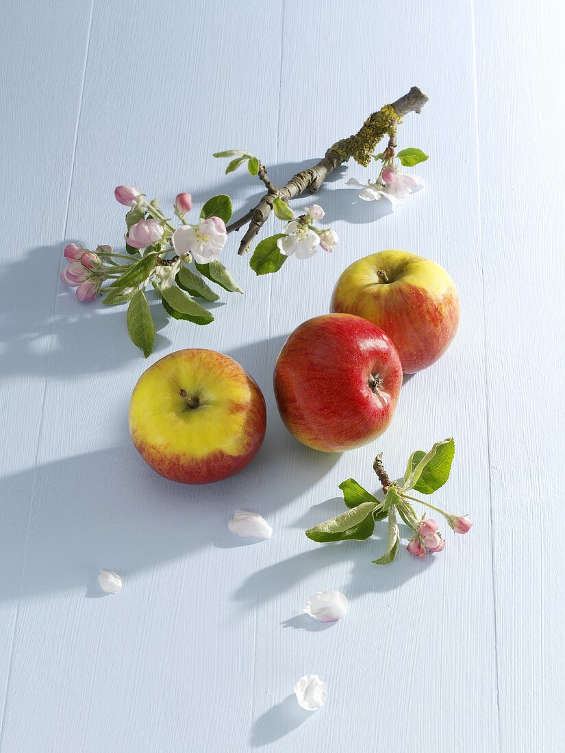 Fresh apples and sprig of apple blossom