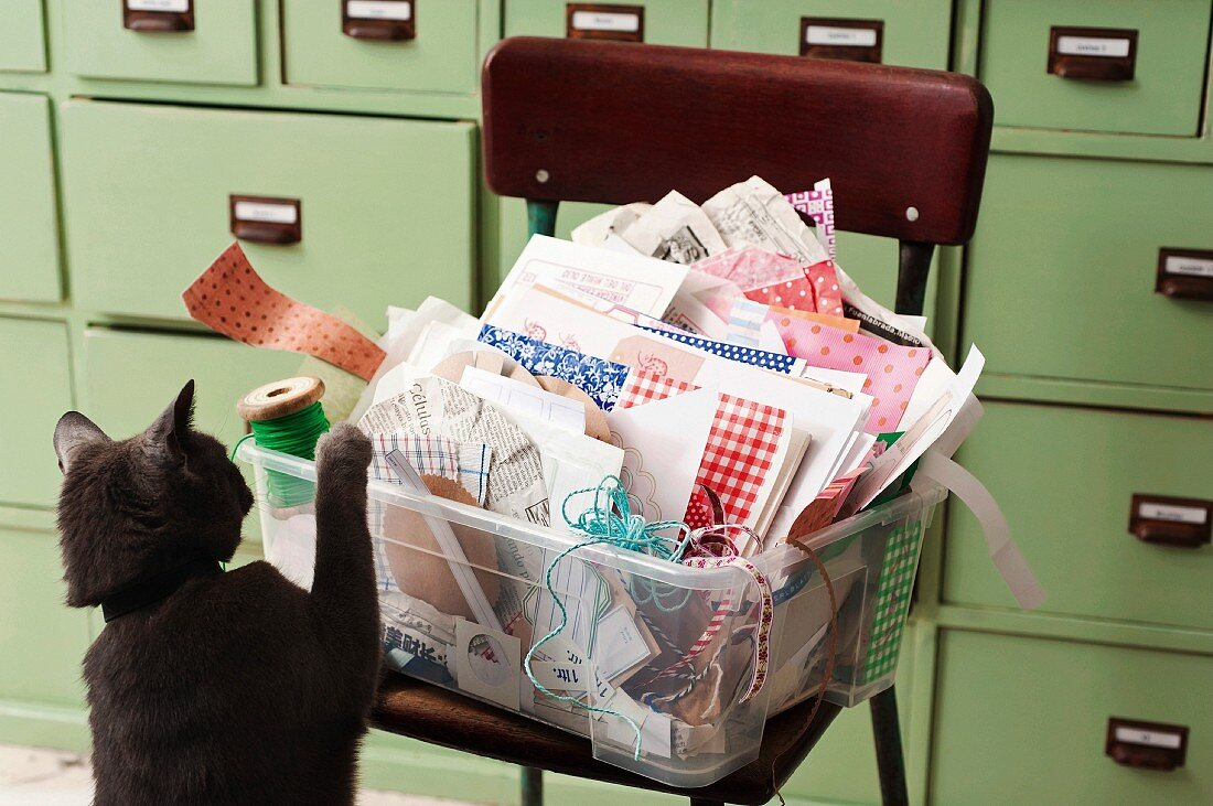 A cat in front of a plastic box full of craft material