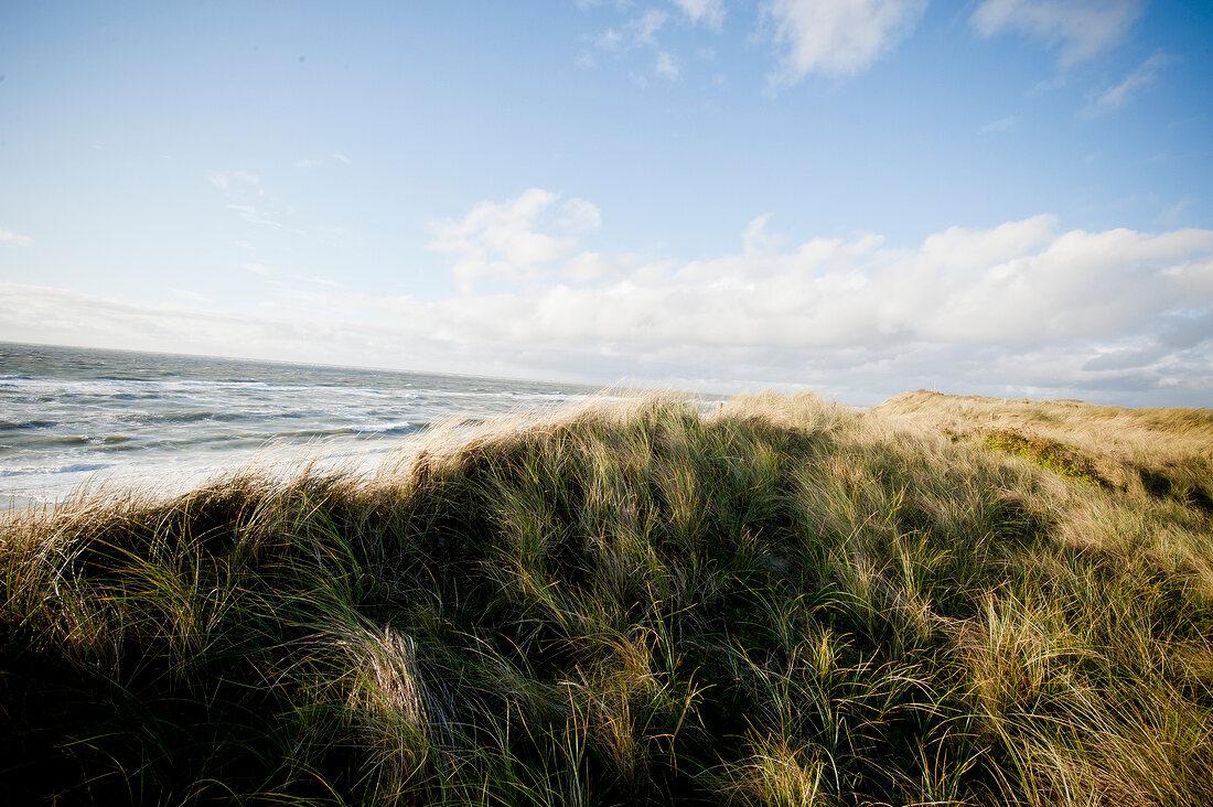 Dunes on west beach, Sylt, Germany
