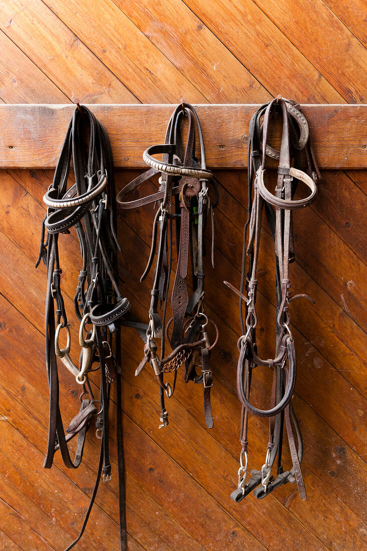 Einohrzaum and bridle hanging on wooden wall, Landegge, Germany