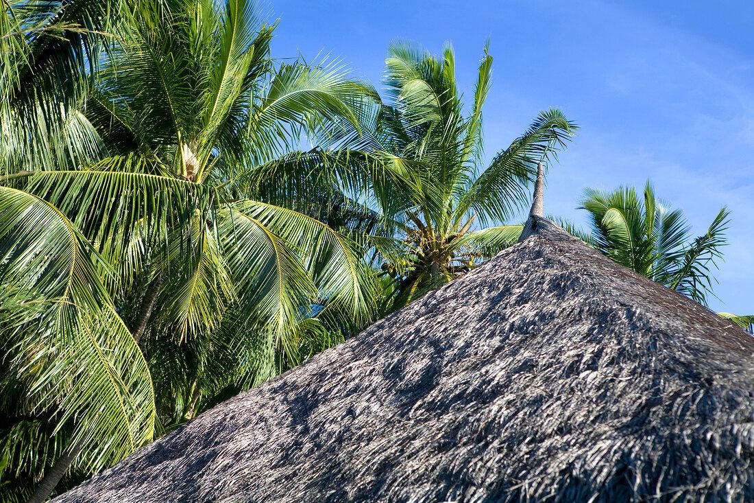 Roof of bungalow in Veliganduhuraa, Maldives