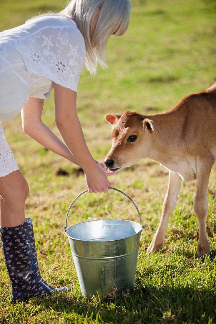 A young woman feeding a calf