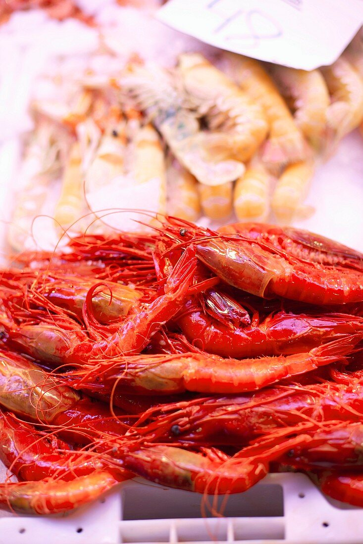 Close up of langoustines for sale