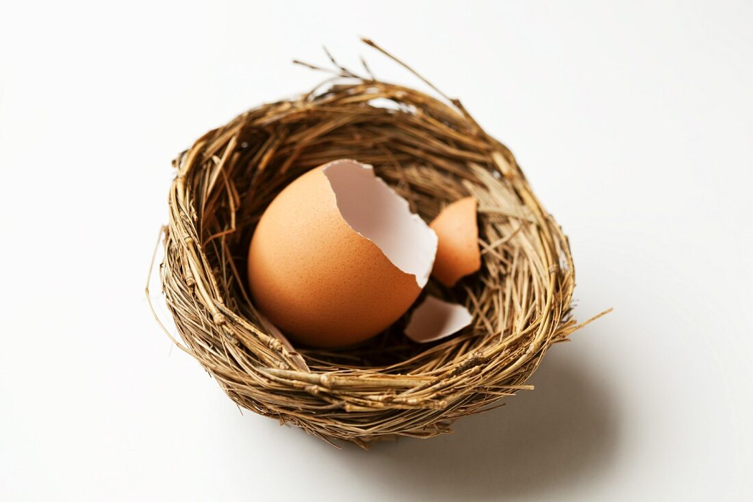 Cracked Brown Egg Shell in a Nest