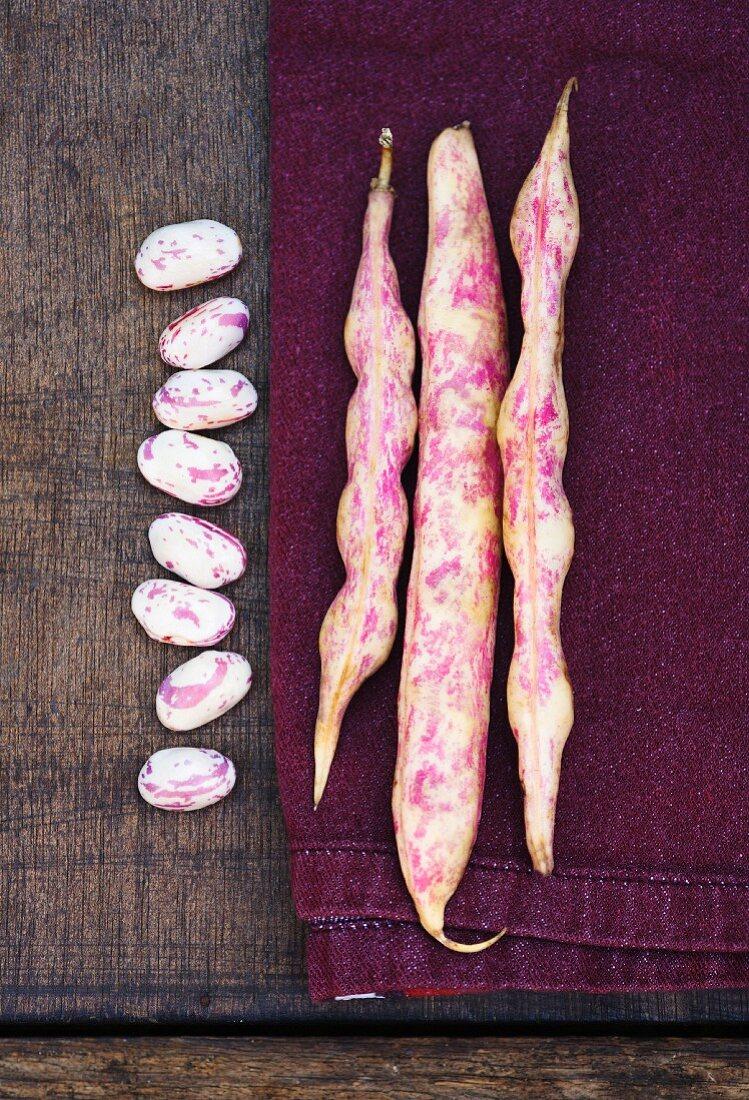 A row of Borlotti bean pods and single borlotti beans