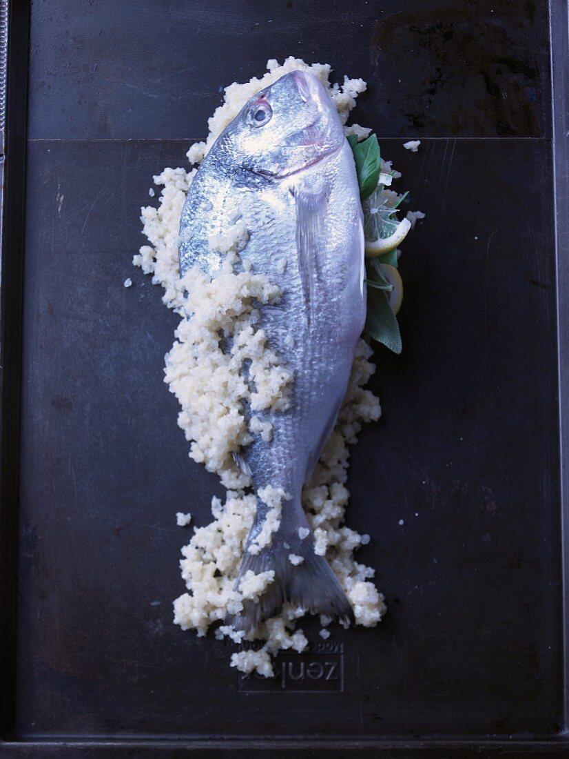 Gilthead with a salt crust