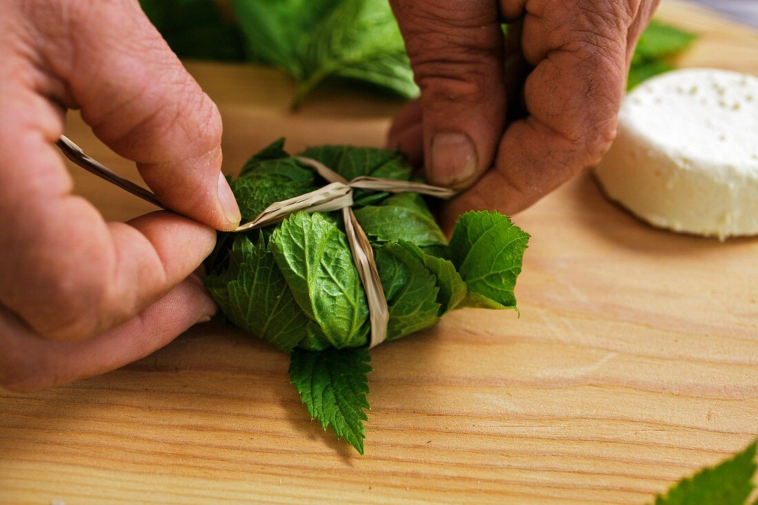 Goat's cheese being wrapped in masterwort leaves
