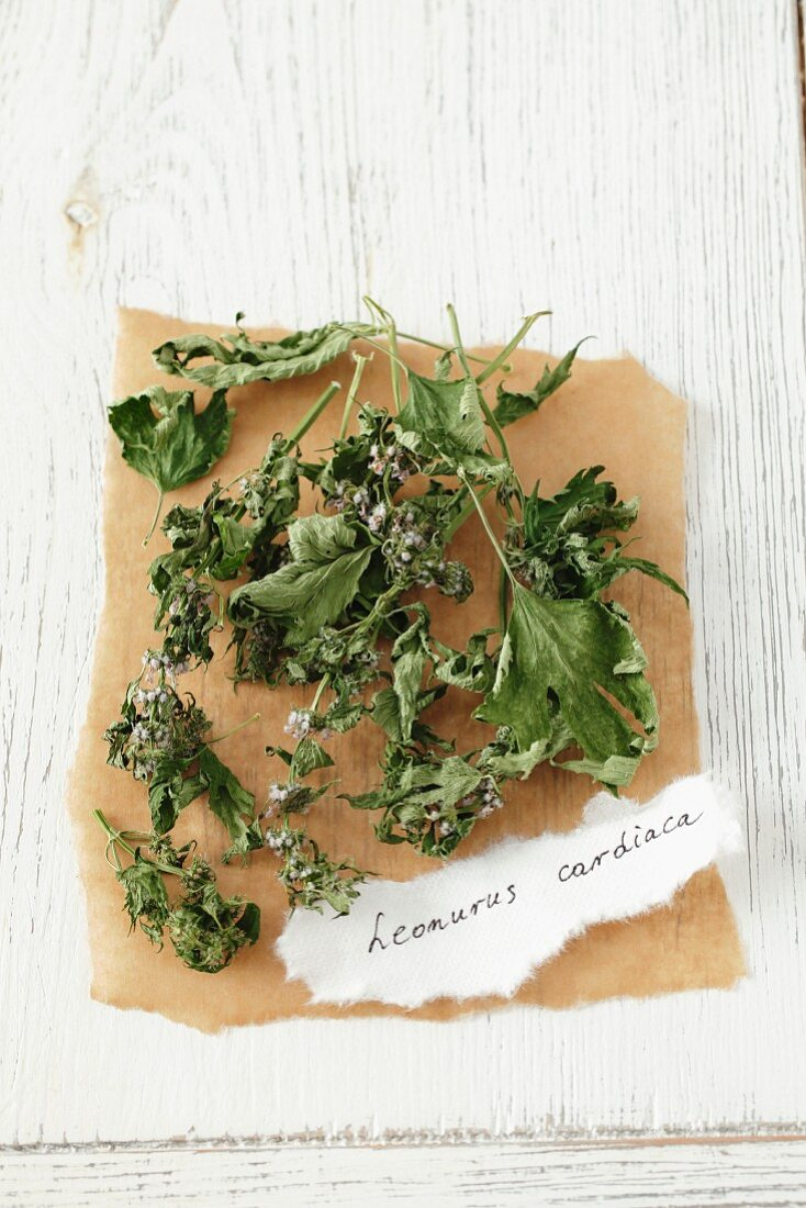 Dried motherwort (Leonurus cardiaca)