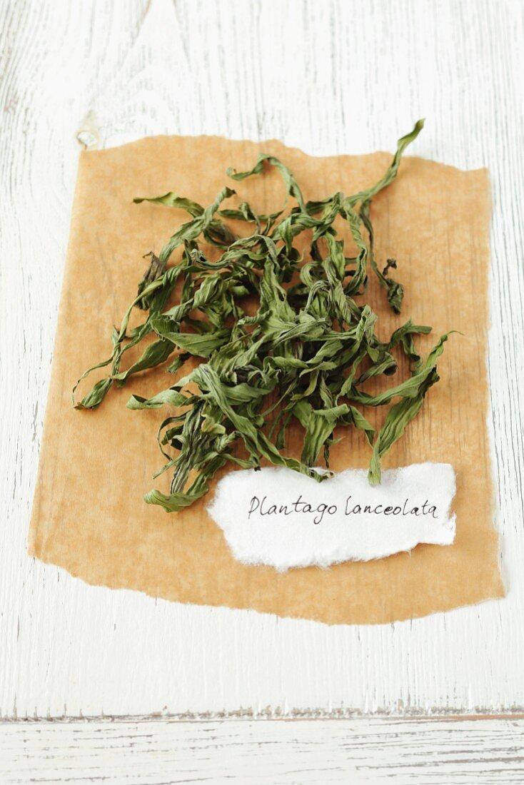 Dried plantain (Plantago lanceolata)