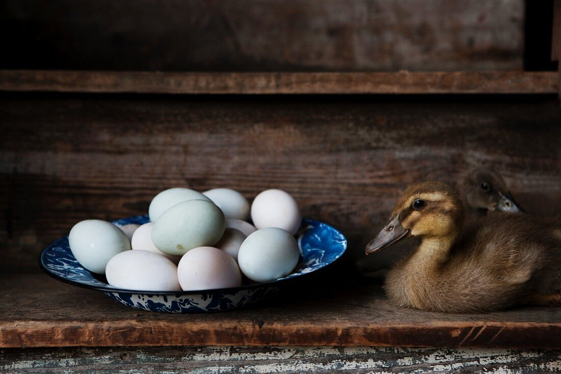 Two Young Ducks with a Bowl of Pastel-Colored Duck Eggs