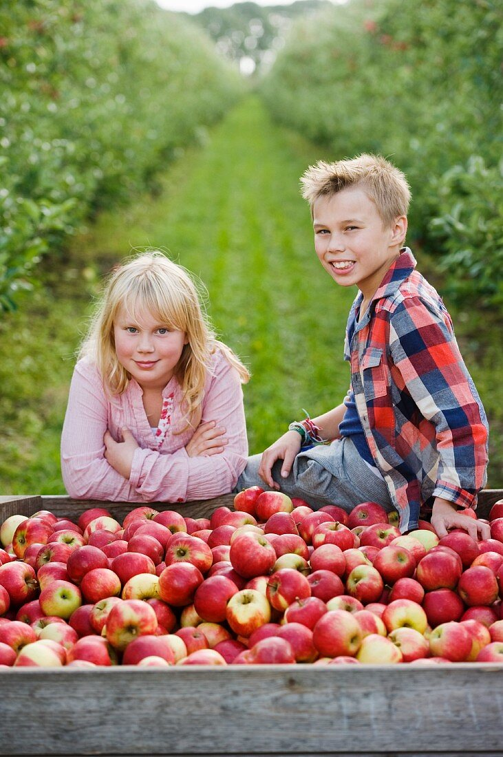 Children harvesting apples