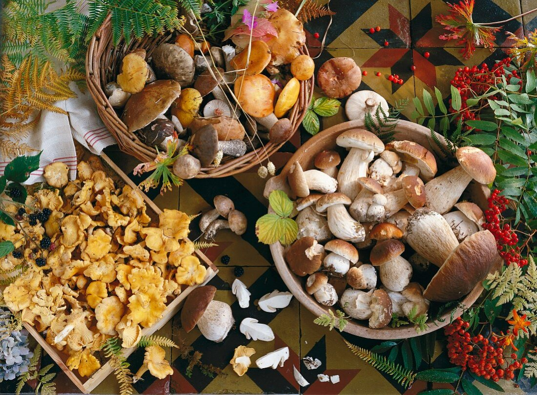 Various mushrooms in baskets