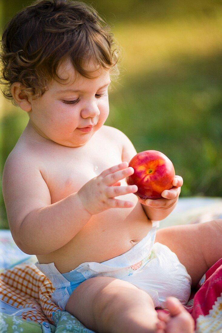 A small child investigating a peach