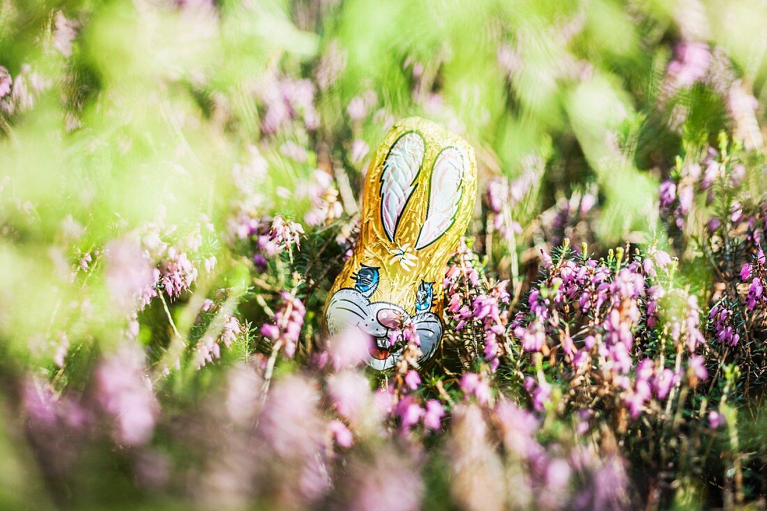 A chocolate Easter bunny hidden amongst the flowers in the garden