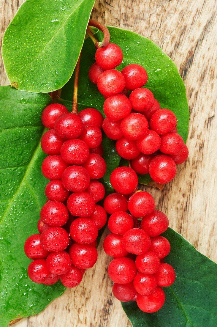 Schizandra berries and leaves