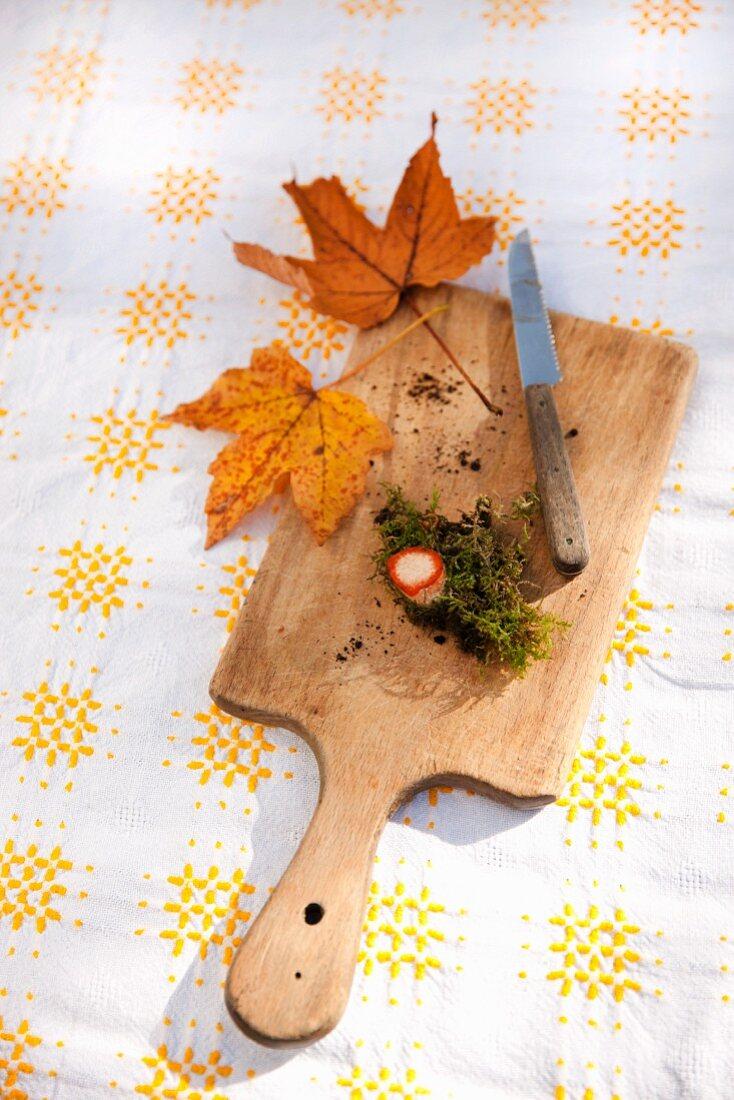 Milk cap mushroom stem with moss, bits of soil, knife and autumn oak leaves
