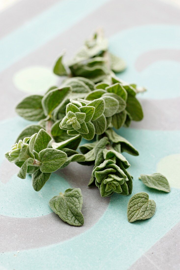Sprigs of fresh oregano and individual leaves