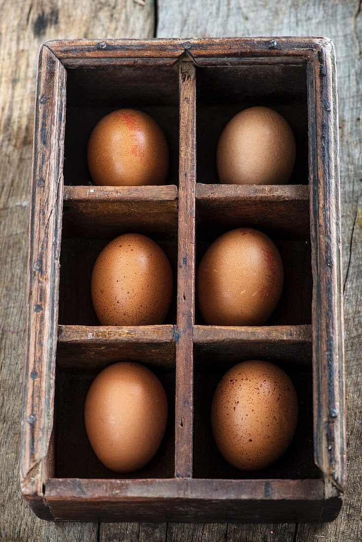 Six brown eggs in a type case